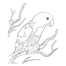 Coloring Pages of Blue Naped Parrot sitting on a Branch