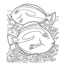 Coral Blue Tang Coloring Pages