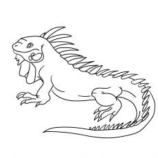 cayman brac iguana - Iguana Coloring Page