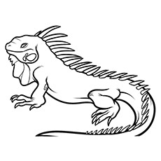 Top 10 Iguana Coloring Pages For Your Little One