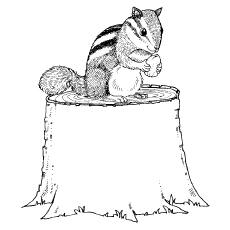 Chipmunk Coloring Pages - Chipmunk