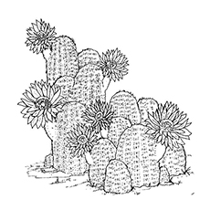 Cactus Coloring Page - Claret Cup
