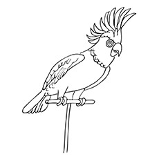 Parrot Coloring Pages - Cockatiel