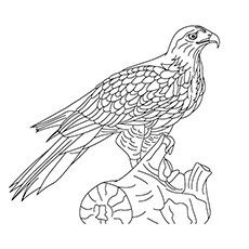 common black hawk coloring pages
