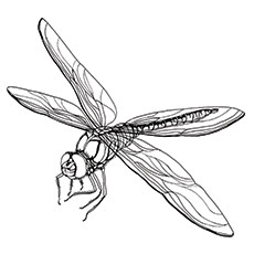 Common Sand Dragonfly Coloring Page
