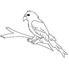 Conure Coloring Images