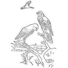 Cooper's Hawk Coloring Pages