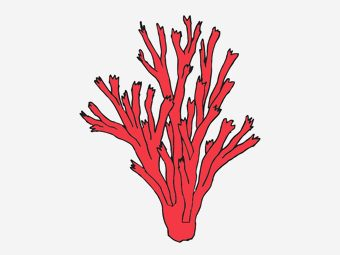 Top 10 Coral Coloring Pages For Toddler