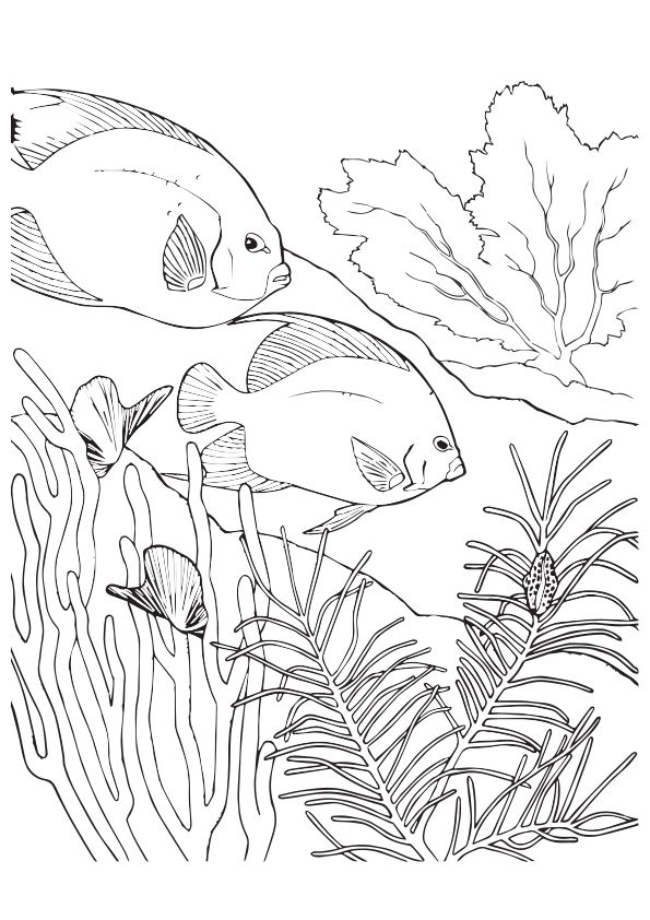 Coral-Fish