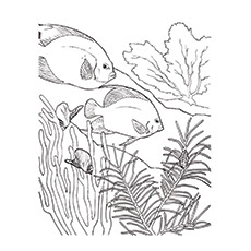 Biomes Coloring Pages Taiga Animals Coloring Sheet Coloring Pages ... | 230x230