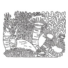 coral reef biome coloring pages