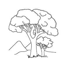 Cotton-Tree-16