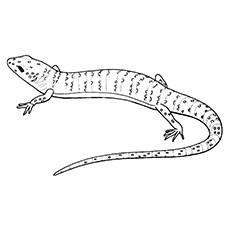 gecko coloring pages crested gecko - Gecko Coloring Pages
