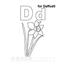 D For Daffodil