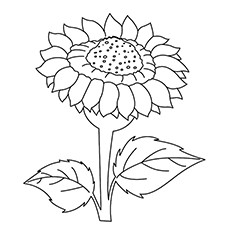 Dafna Sunflower Coloring Page