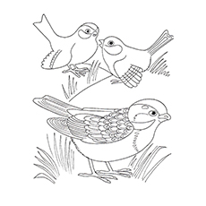 Sparrow Coloring Page - Dark Eyed Junco