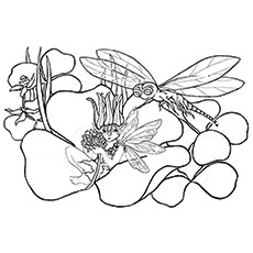Dragonfly Coloring Page - Dragonfly With Butterfly Fairy