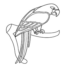 Coloring Pages of Eclectus Parrot
