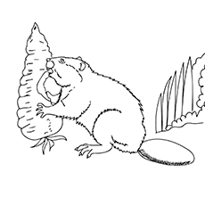 European Beaver Eating Coloring Sheet For Kids