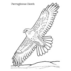 ferruginous hawk coloring pages