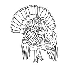 Picture to Color of Florida Wild Turkey
