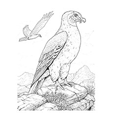 formidable hunter hawk coloring pages