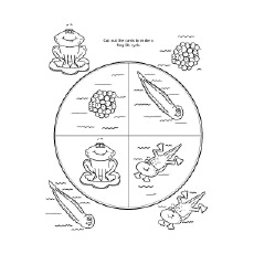 Frog Lifecycle Printable to Color