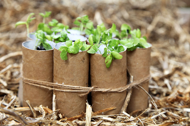 Toilet Paper Roll Crafts - Go Green With Empty Toilet Rolls