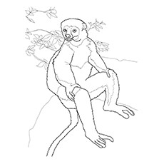 Lemur Coloring Page - Golden Crowned Sifaka