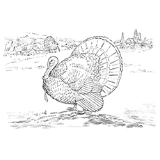 Free Coloring Pages of Gould's Wild Turkey