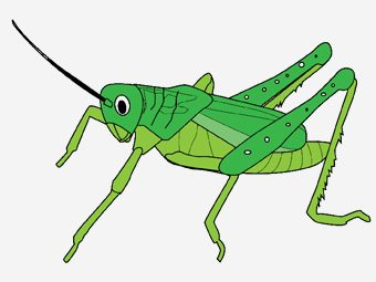 Top 10 Grasshopper Coloring Pages Your Toddler Will Love To Color