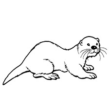 Hairy-Nosed Otter Coloring Page