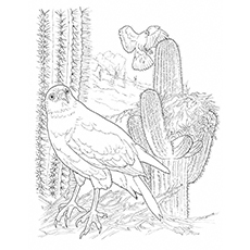 Cactus Coloring Page - Harris Hawk And Cactus