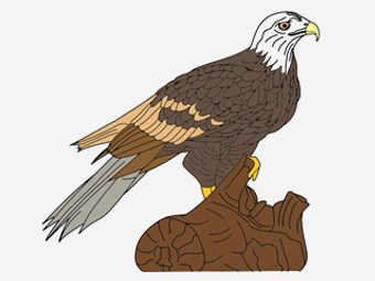 10 Best Hawk Coloring Pages For Your Toddler