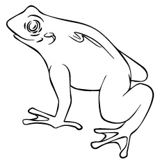 Coloring Page of Horned Pacman Frog
