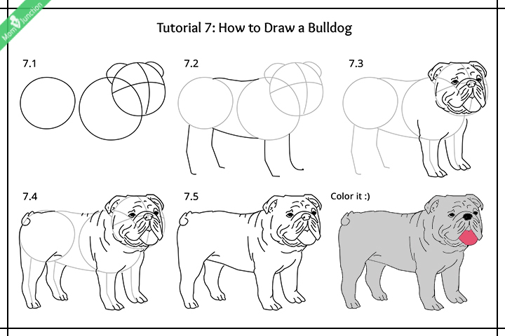 How To Draw A Bulldog Pictures