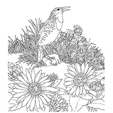 hummingbird and sunflower coloring page