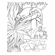 Iguana Coloring Page - Iguana Perched On A Tree