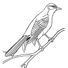 Sparrow Coloring Page - Lark Bunting
