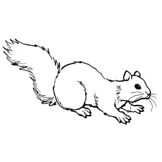 Chipmunk Coloring Pages - Least-Chipmunk