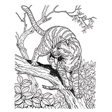 Lynx Coloring Page - Lynx Climbing The Tree