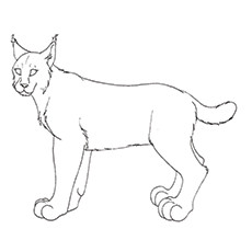 Lynx Coloring Page - Lynx Hunting