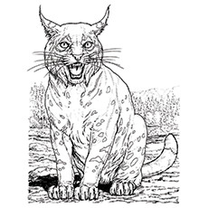 Lynx Coloring Page - Lynx Purring
