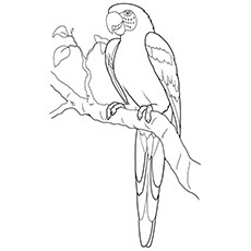 Coloring Sheet of Macaw Parrot