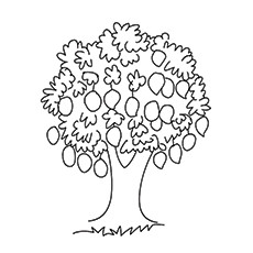 Printable Coloring Pages of Mango Tree Free