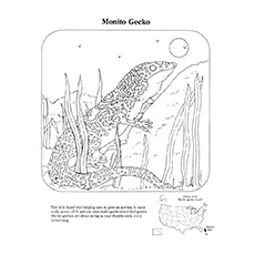 Gecko Coloring Pages - Monito Gecko
