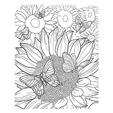 moulin rouge sunflower coloring page
