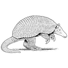 nine banded armadillo coloring page