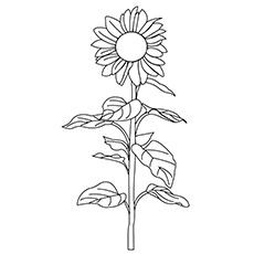 Pacino Cola Sunflower Coloring Page