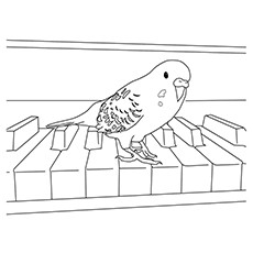 Parrotlet Parrot On Piano Coloring Pages